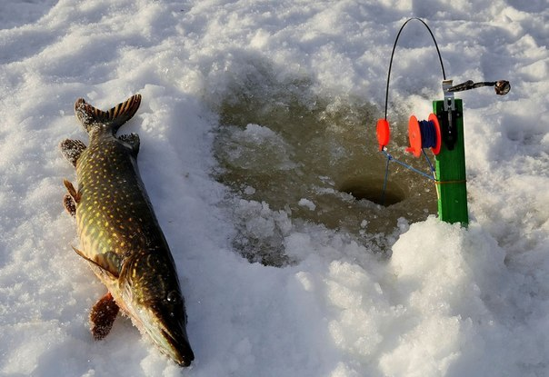 ловля рыбы жерлицами