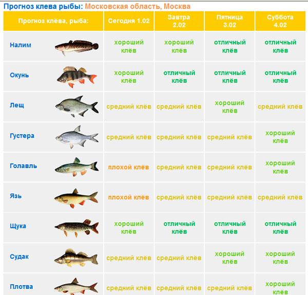 Прогноз клева рыбы в костроме на неделю стоит ли ехать на рыбалку