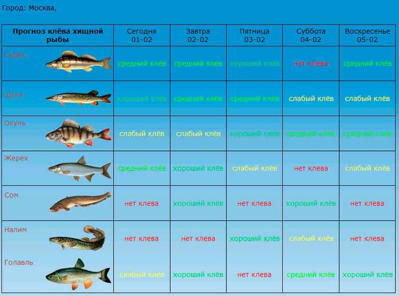 Пргноз рыбака